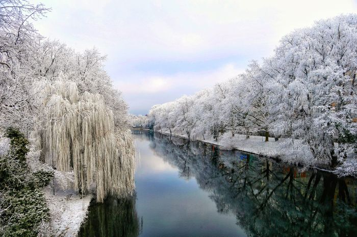 Nature Tree Beauty In Nature Tranquil Scene Scenics Sky Winter Water No People Tranquility Cold Temperature Outdoors Snow Day River EyeEmNewHere Landscape_Collection EyeEm Nature Lover Travel Destinations Eye4photography  The Week On EyeEm Heilbronn Neckar River Neckar Frozen