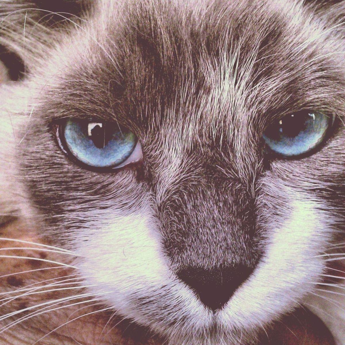 Cute Cats EyeEm Cute