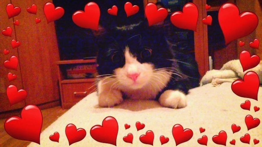 Васька мой котейка:* Hi! First Eyeem Photo