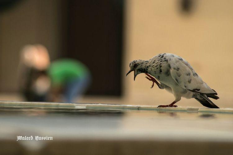 Stree Photography تصويري  Birds الطبيعة