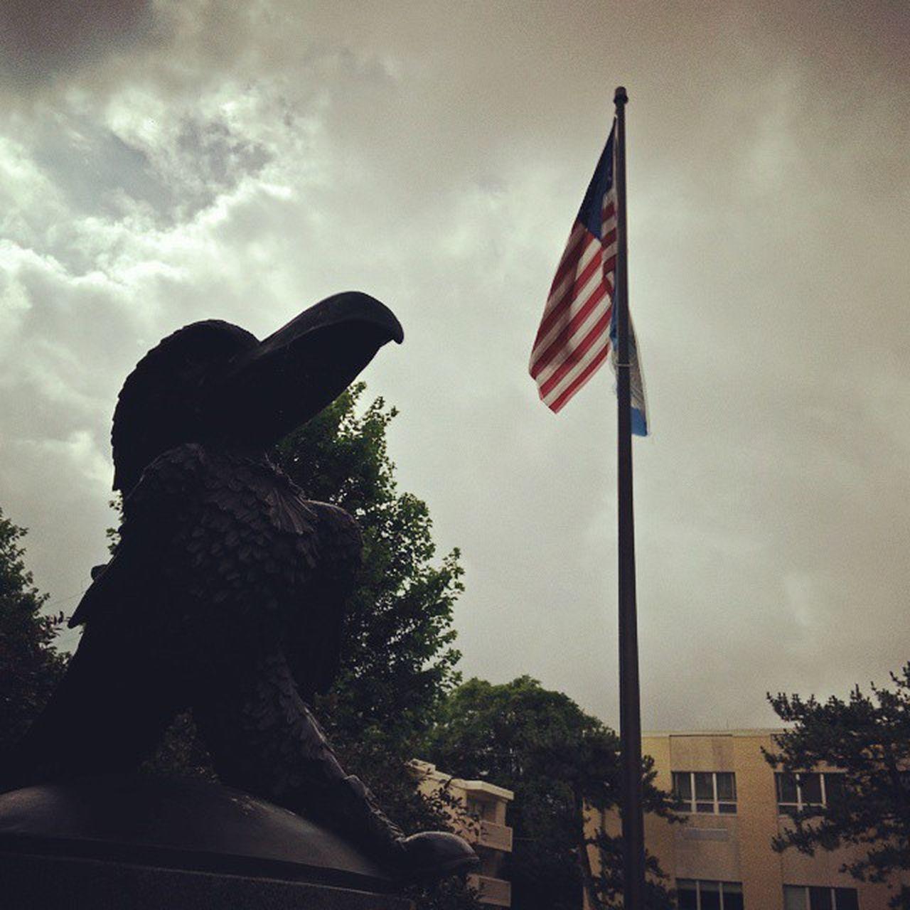 American Jayhawk. Rise LFK Fascistnoise