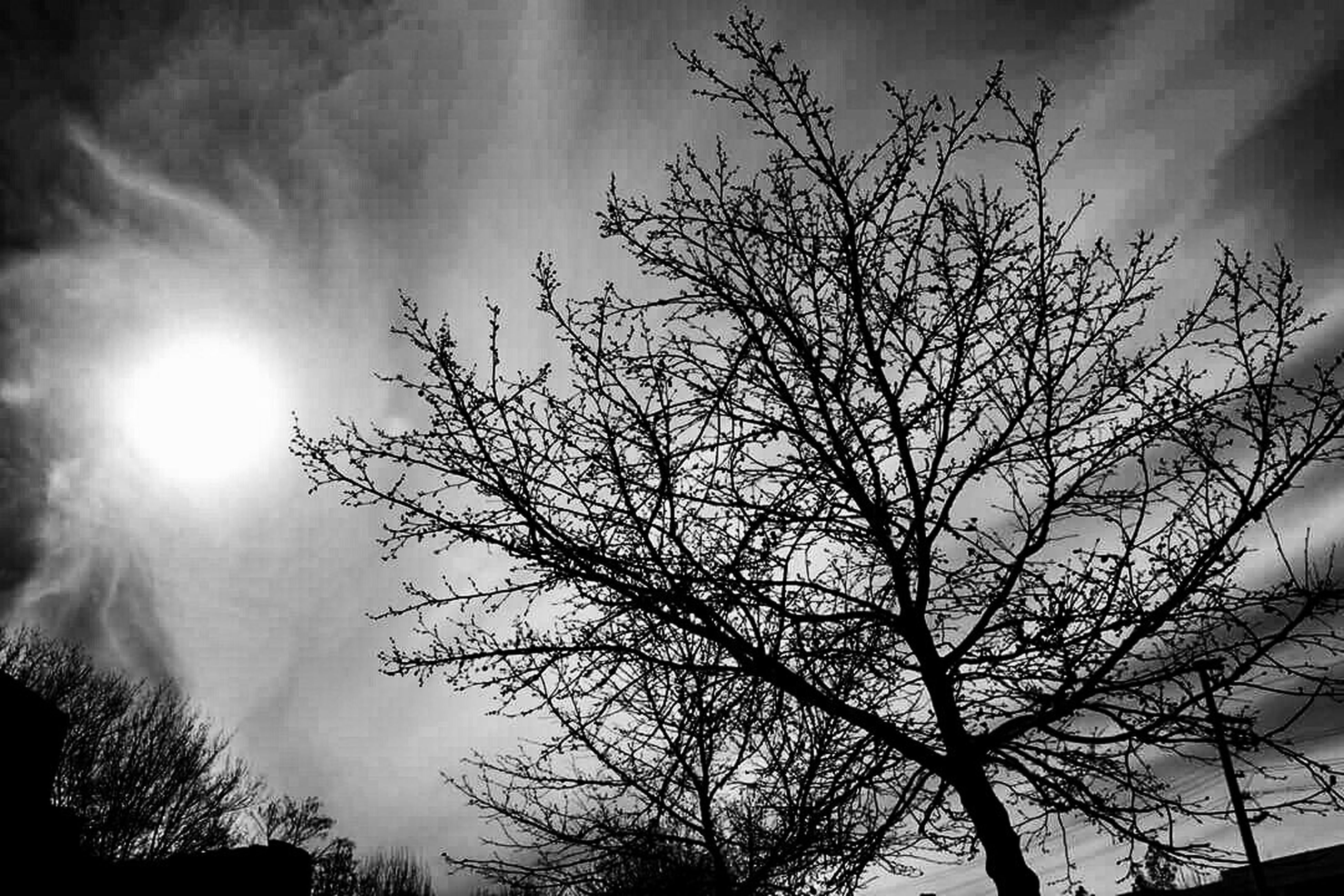low angle view, silhouette, tree, sky, branch, bare tree, sun, cloud - sky, beauty in nature, nature, tranquility, scenics, sunbeam, sunlight, growth, tranquil scene, cloudy, sunset, cloud, outdoors