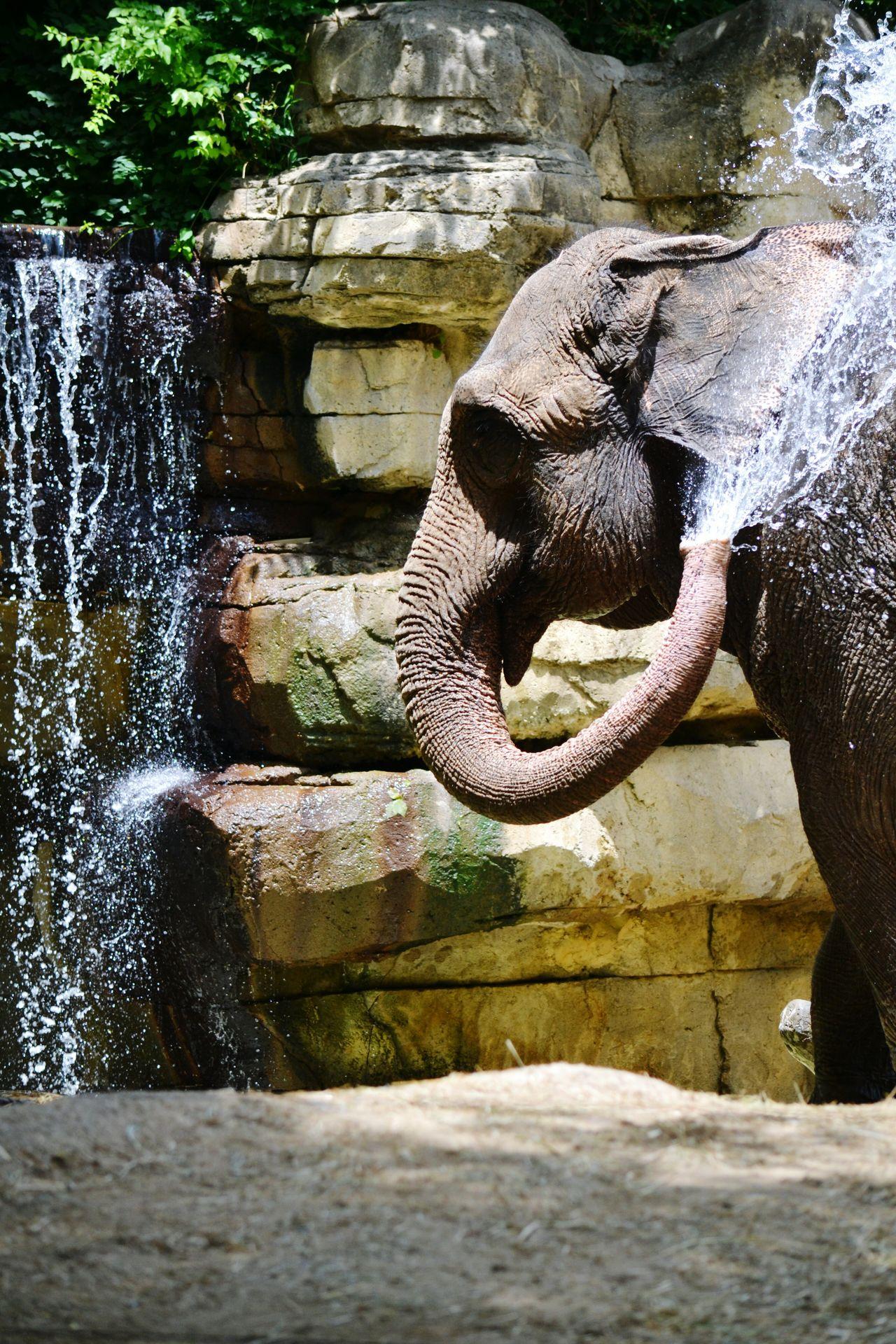 Nature Elephant Elephant Taking A Bath