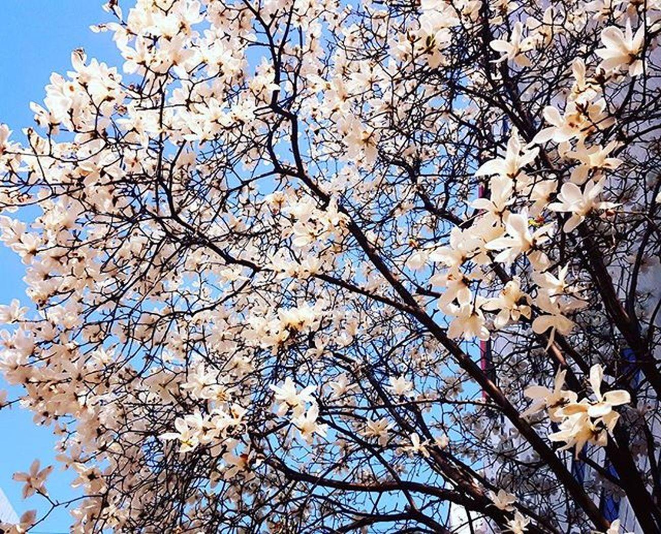 Photography Photographer 부산 Busan Spring Flower 일상 데일리 감성 감성사진 사진 여행 일상공유 Sotong 미러리스카메라 Follow Followme Photo Travel Daily Southkorea