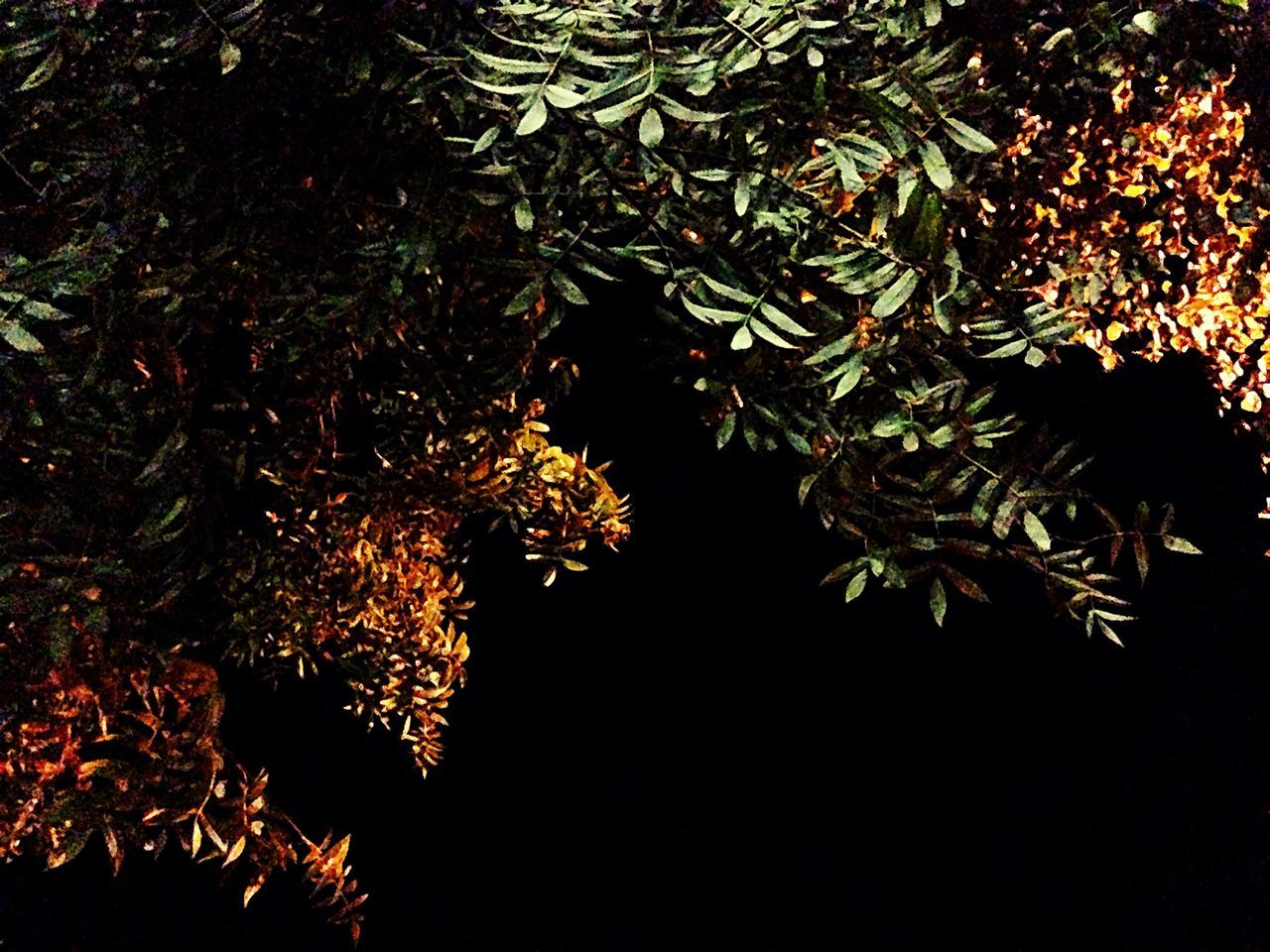 tree, growth, nature, night, beauty in nature, branch, no people, leaf, outdoors, close-up, freshness