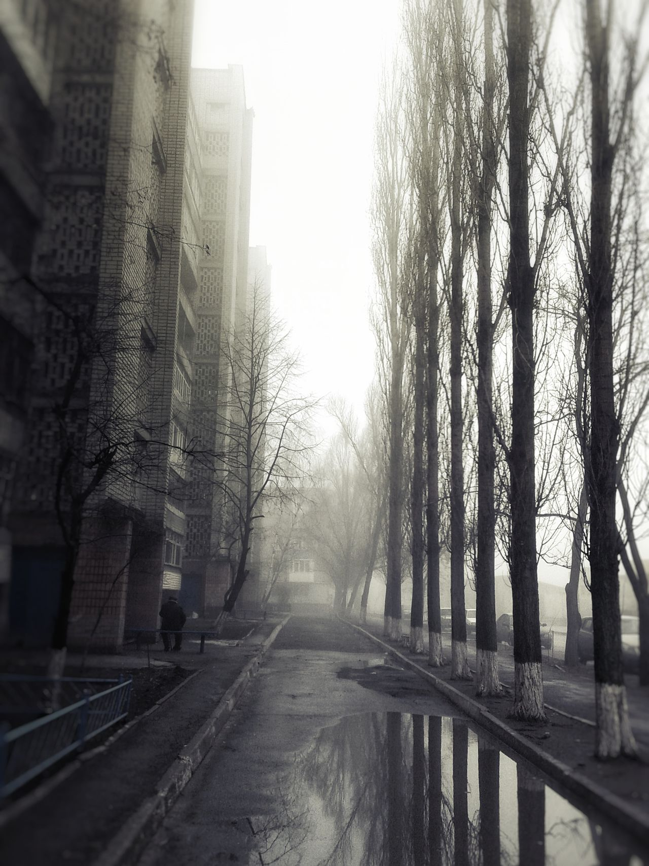 Growth Walking Built Structure Rain Water Rainy Season Cold Temperature Town Foggy Springtime Foggy Morning Tranquility Spring Foggy Weather Reflection Outdoor Photography Branch Bare Tree Outdoors Weather Wet Calm The Way Forward
