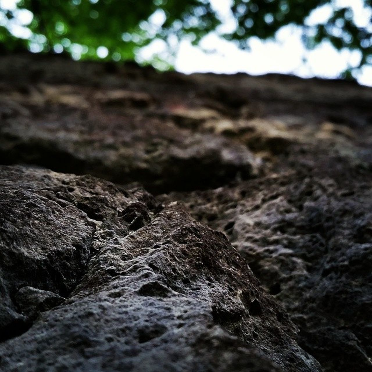 rough, nature, outdoors, no people, close-up, day, focus on foreground, textured, rock - object, beauty in nature, tree, animal themes