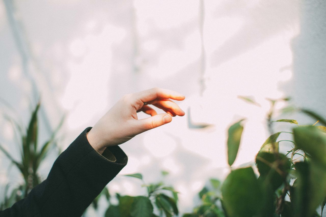 Fingers Freshness Garden Human Hand One Person Plant Sunlight Sunlight And Shadow