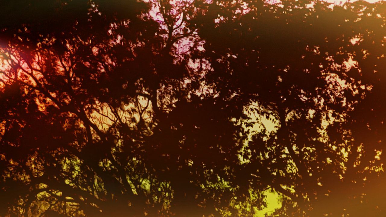 Trees Nature Filter