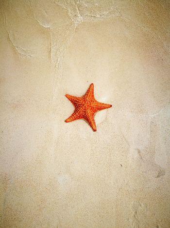 San Blas Island San Blass Panama Starfish  Star Shape Sea Life Sea Animal Wildlife No People Nature Beauty In Nature Beach Sand Natural Beauty Islandphotography Simply Beautiful Beauty Colorful Life Colorful Animal Themes