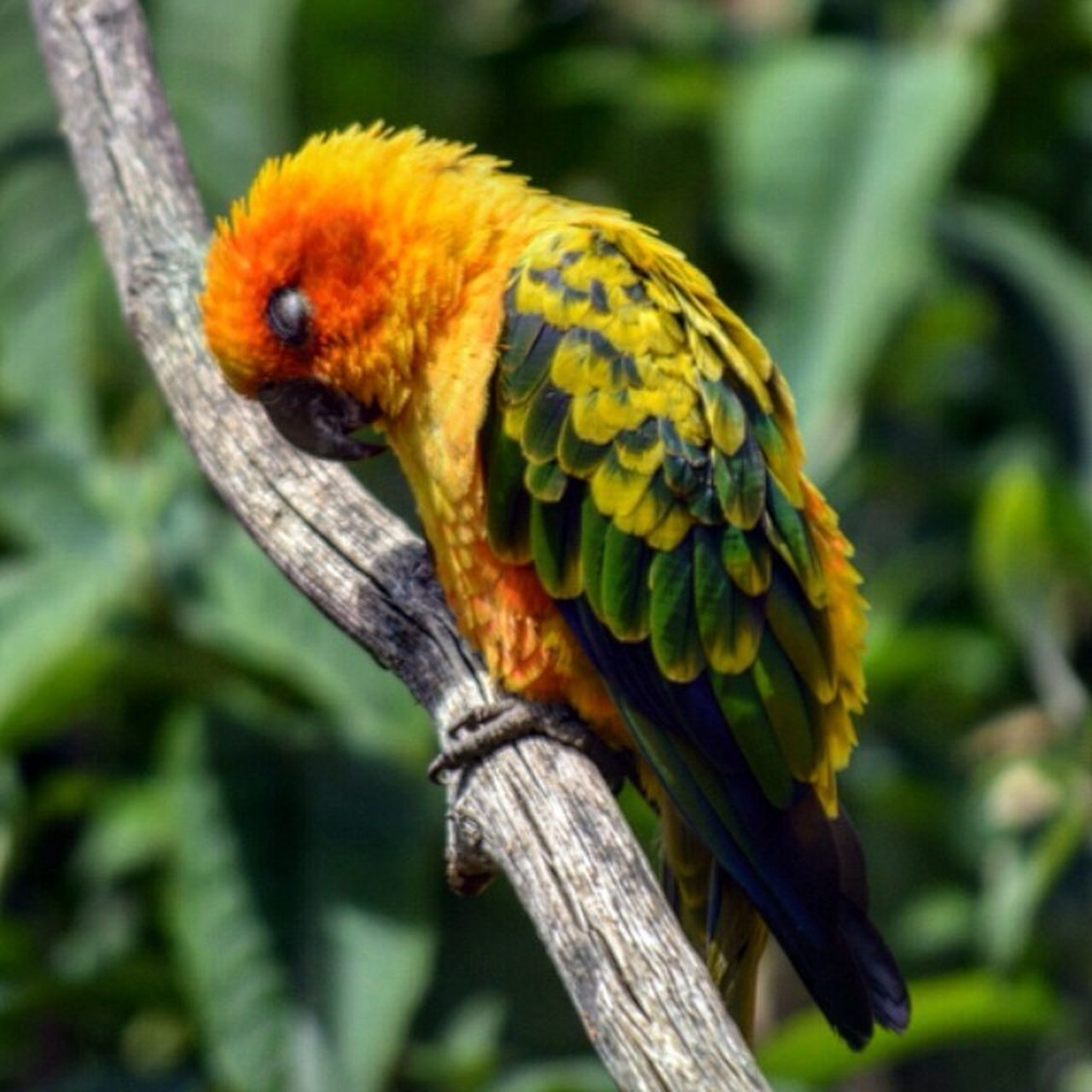 Animals Birds Parrot Colourful Beautiful Nature
