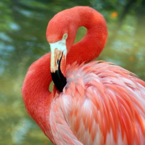 Coral By Motorola Flamingo at the zoo Flamingo