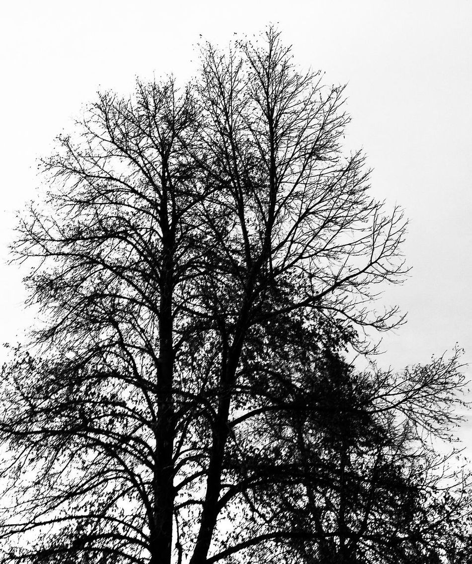 Tree Nature Sky Low Angle View Branch No People Growth Outdoors Treetop Day Beauty In Nature Black & White Dramatic Sky Beauty In Nature Silhouette Nature Denver Colorado  Denvertography
