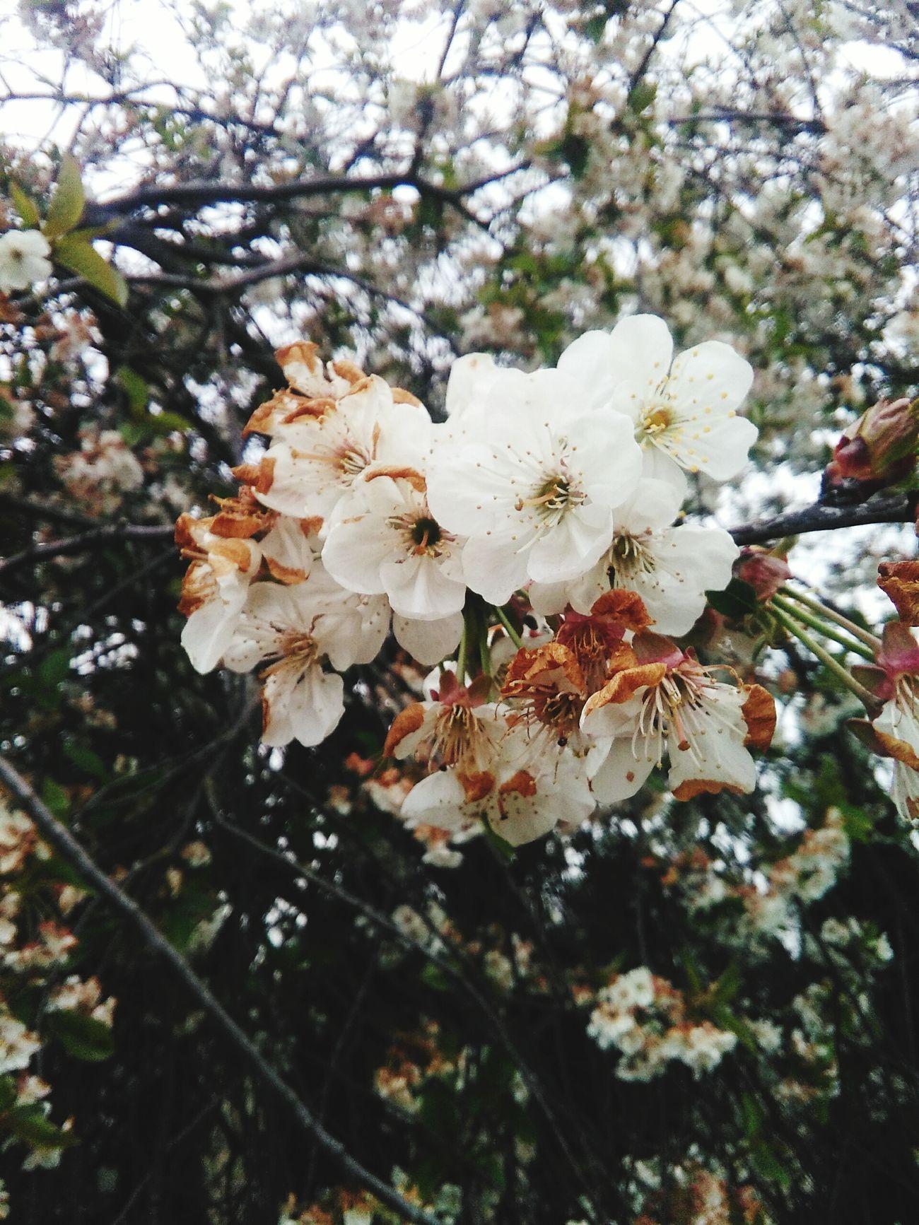 Kwiaty Białe White Foto Day Polish Girl Sweet♡ My Love❤ Folowme Crayzy Poland 💗 Nature
