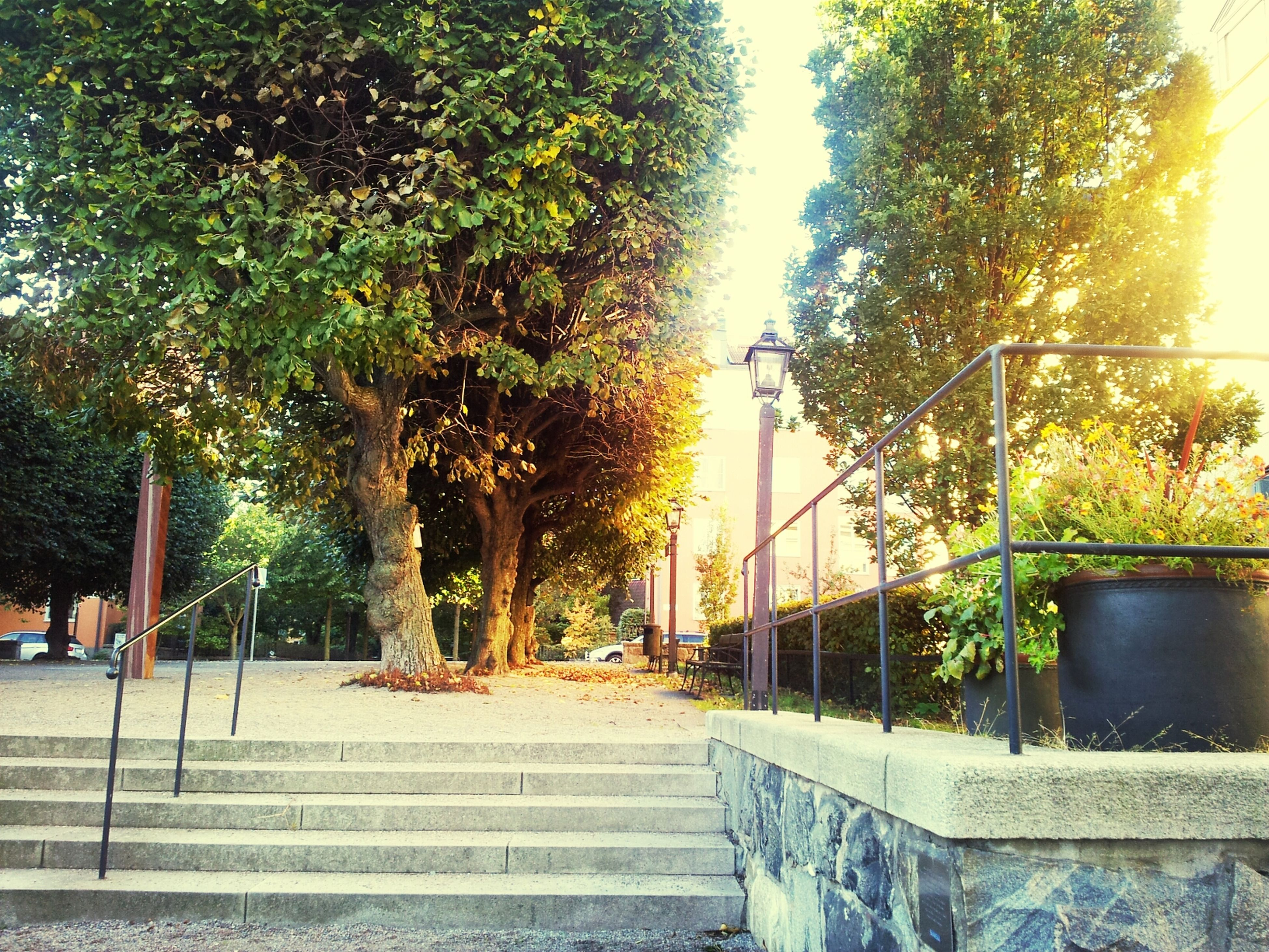 tree, the way forward, built structure, growth, architecture, building exterior, railing, transportation, footpath, street light, green color, sunlight, plant, street, sidewalk, outdoors, walkway, day, clear sky, steps
