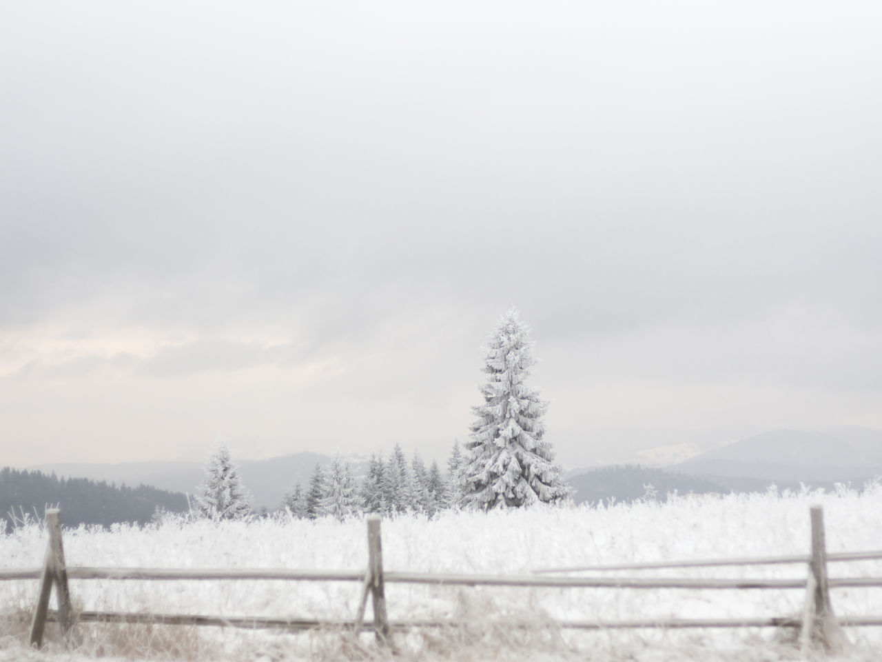 Beautiful stock photos of weihnachtsbaum, tree, nature, cold temperature, winter
