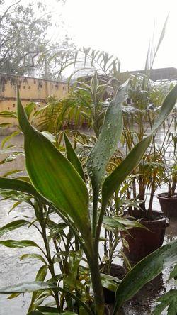 In the rain Leaf