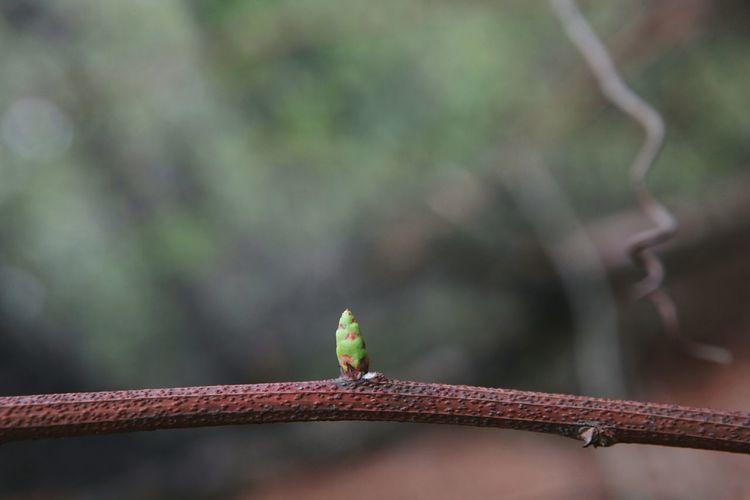 삼님을담다   Small And Big Potential  Greeneye Onlyyou Sololife 바른생태살림원   be the Nature