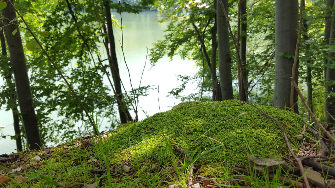 Beauty In Nature Freshness Leaf Moss Nature Plant Tree Tree Trunk Romanian Lands Week On Eyeem Landscape