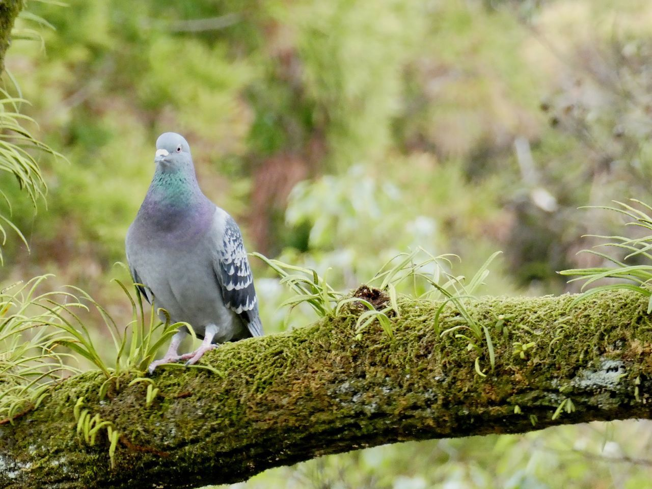 bird, animal themes, animals in the wild, one animal, perching, no people, nature, animal wildlife, day, outdoors, close-up