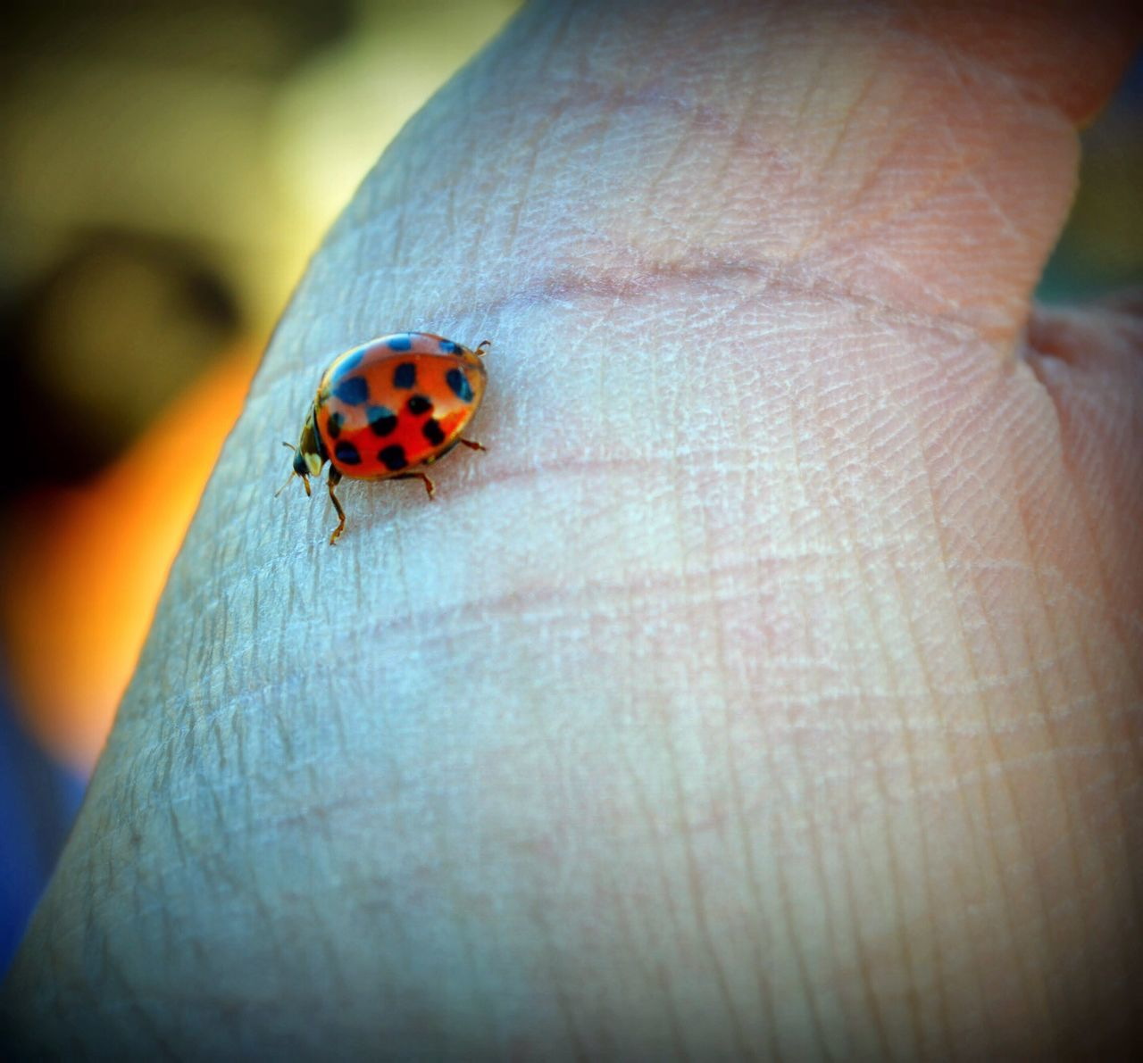 A lady bug in the hand. Check This Out