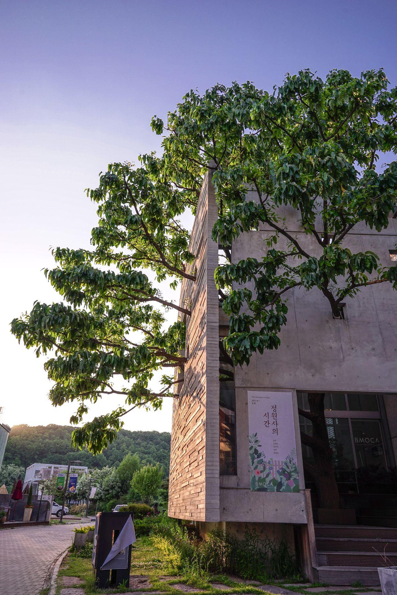 Paju, S. Korea 헤이리마을 Tree Architecture Nature Tree