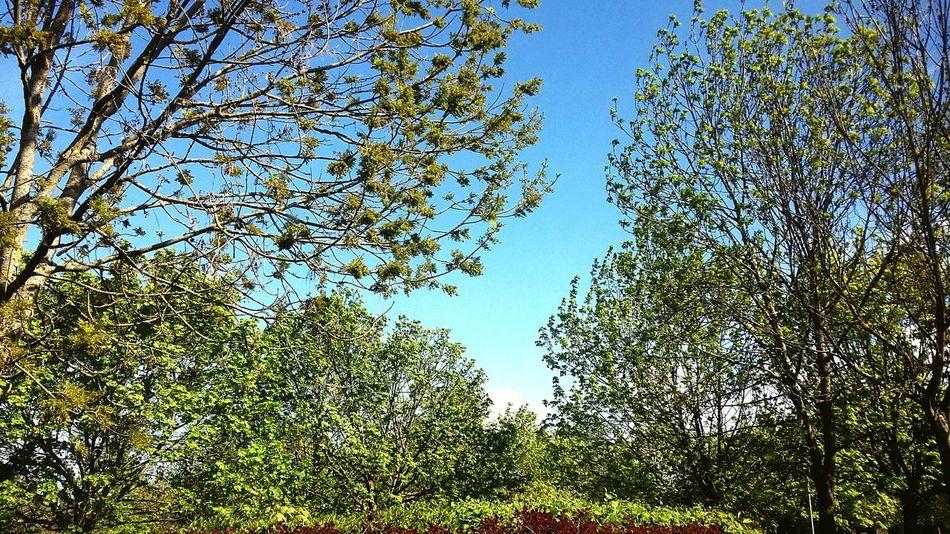 Spring is definitely here! Life 2 Filter Blue Sky Trees Leaves Springtime Hugging Trees Green Leaves EyeEm Gallery EyeEm Trees EyeEM Photos