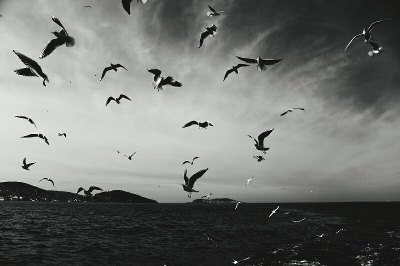 Sea And Sky Seagulls Islandlife Vapur Ve İstanbul