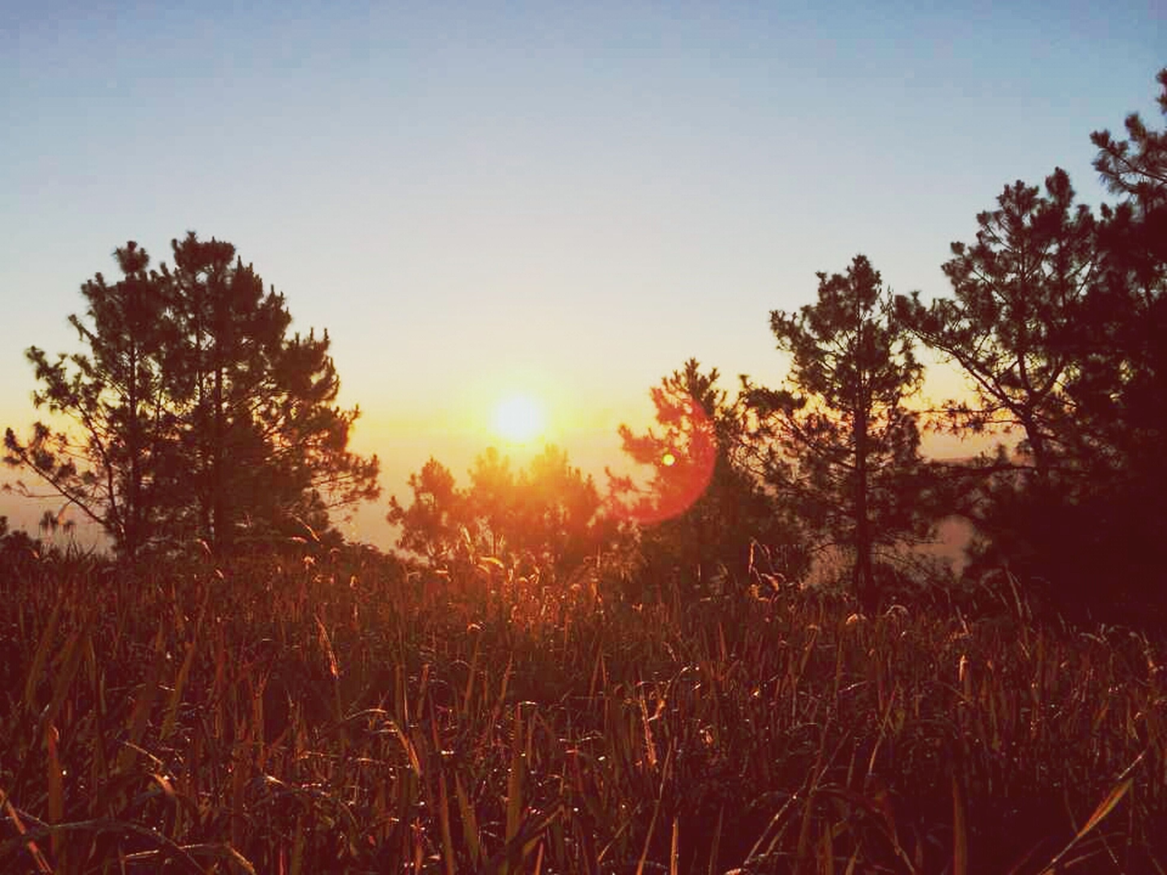 sun, sunset, clear sky, tree, tranquility, tranquil scene, beauty in nature, silhouette, growth, sunlight, scenics, nature, field, copy space, sky, lens flare, sunbeam, landscape, idyllic, plant