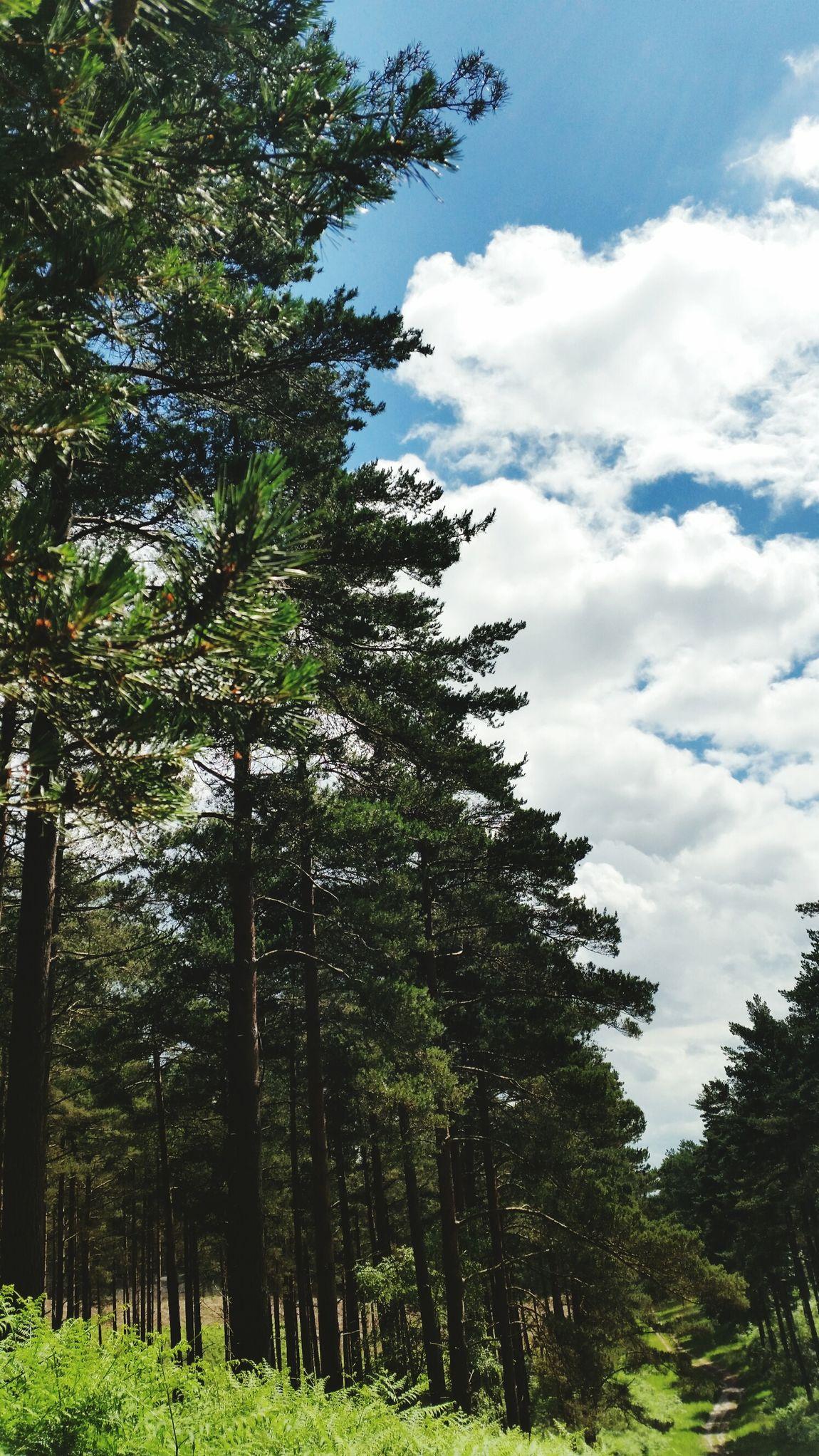 decrement. 🚴💙 Nature Nature_collection Nature Photography Swinley United Kingdom