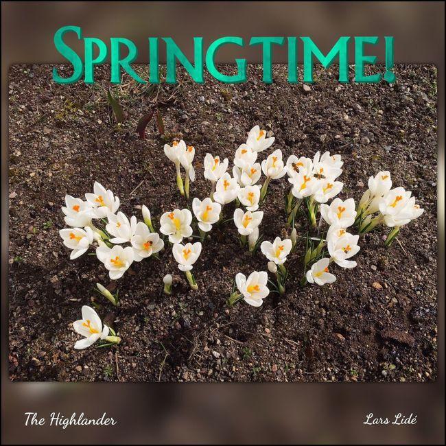 Springtime 2016 #springtime #spring #lovely #colorful #photoshoot #flower #fotorus #lipix_pro #garden #highland #sweden