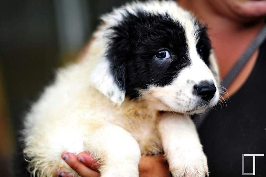 Dog Doghouse Dog House White Dog Look Dog Eye Cute Cute Dog  Pet Cute Pet Pet Dog  50mm 1.4