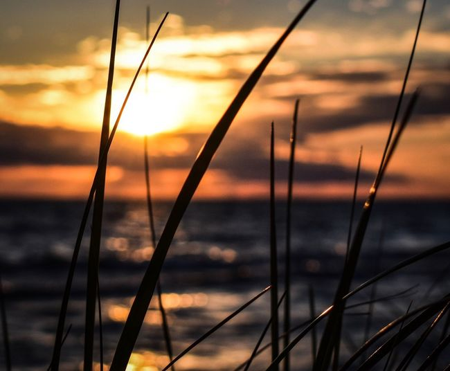 Pure Michigan Sunset Nature Sky No People Outdoors Tranquility Focus On Foreground Beauty In Nature Scenics Tranquil Scene Sea Water Grass Close-up Day Taking Photos Dof Sunset_collection Beach