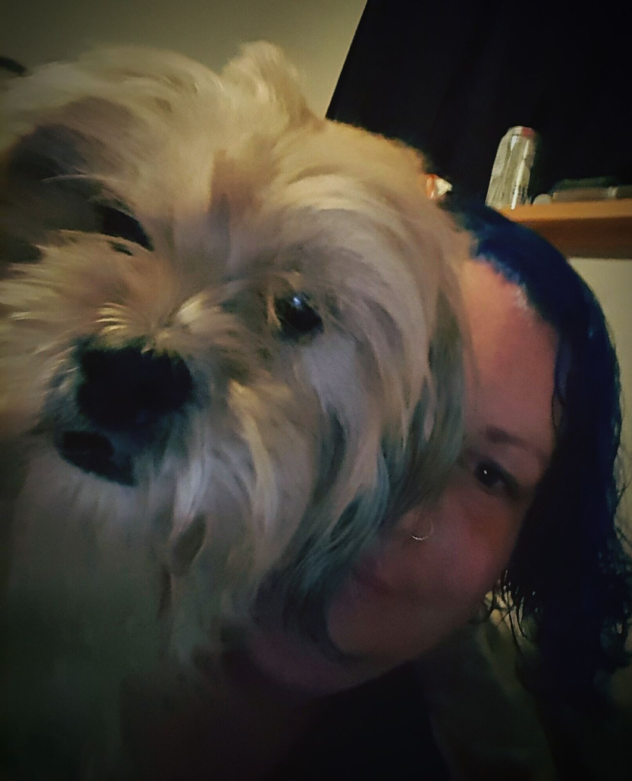 My first pic with my Lacee Lou Puppy Love Blue Hair Doin My Thang Utopia love her to the moon and back