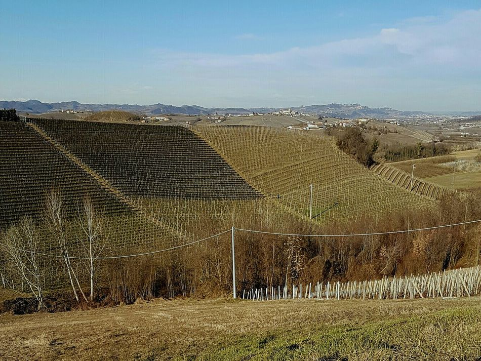 Growth Agriculture No People Outdoors Landscape Barolo Wineyards Winter Travel Destinations Vineyards In Winter Piedmont Italy Langhe Clear Sky Scenic View Blue Tranquility Calming Views Rural Scene EyeEmNewHere