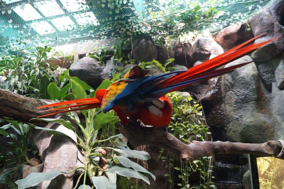 #Amarillo #animal #birds #captivity #guacamaya #macaw #naturecolors #park #Pets #red #Rojo #yellow