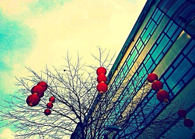 Lantern Winter Chinese New Year Red