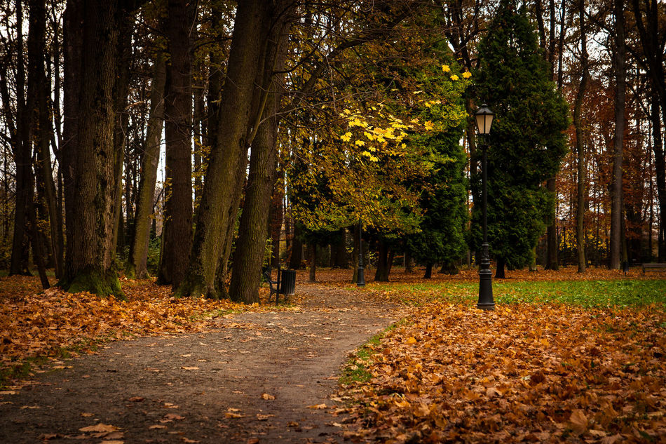 Beauty In Nature Day EyeEm Best Shots EyeEm Nature Lover Fall Nature No People Outdoors Park