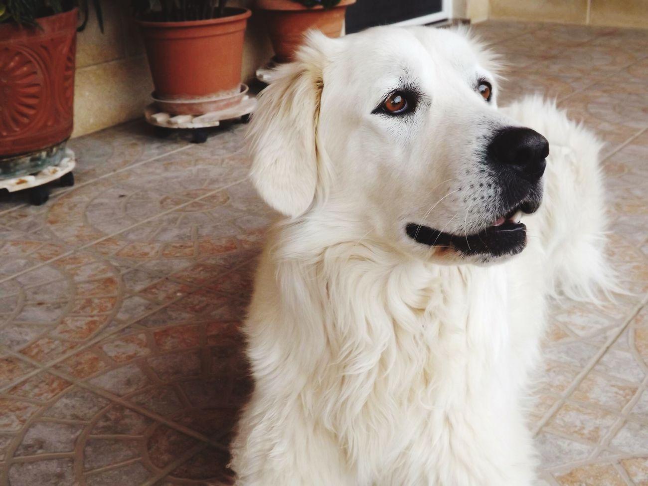 Ramona ❤️ I Love My Dog Mansbestfriend My Life