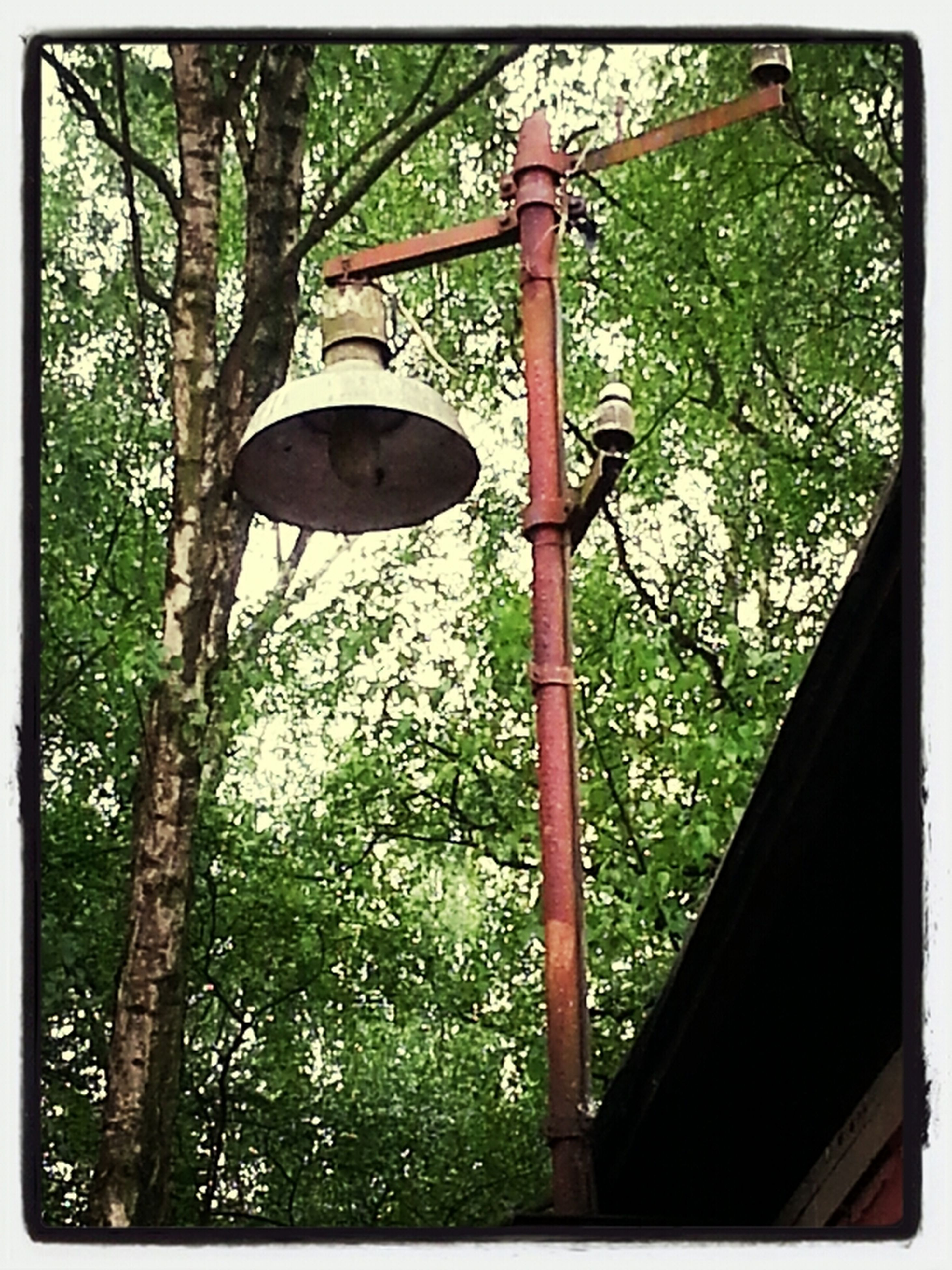 tree, transfer print, growth, auto post production filter, green color, hanging, plant, branch, nature, day, lighting equipment, no people, outdoors, street light, tranquility, forest, wood - material, sunlight, metal, tree trunk