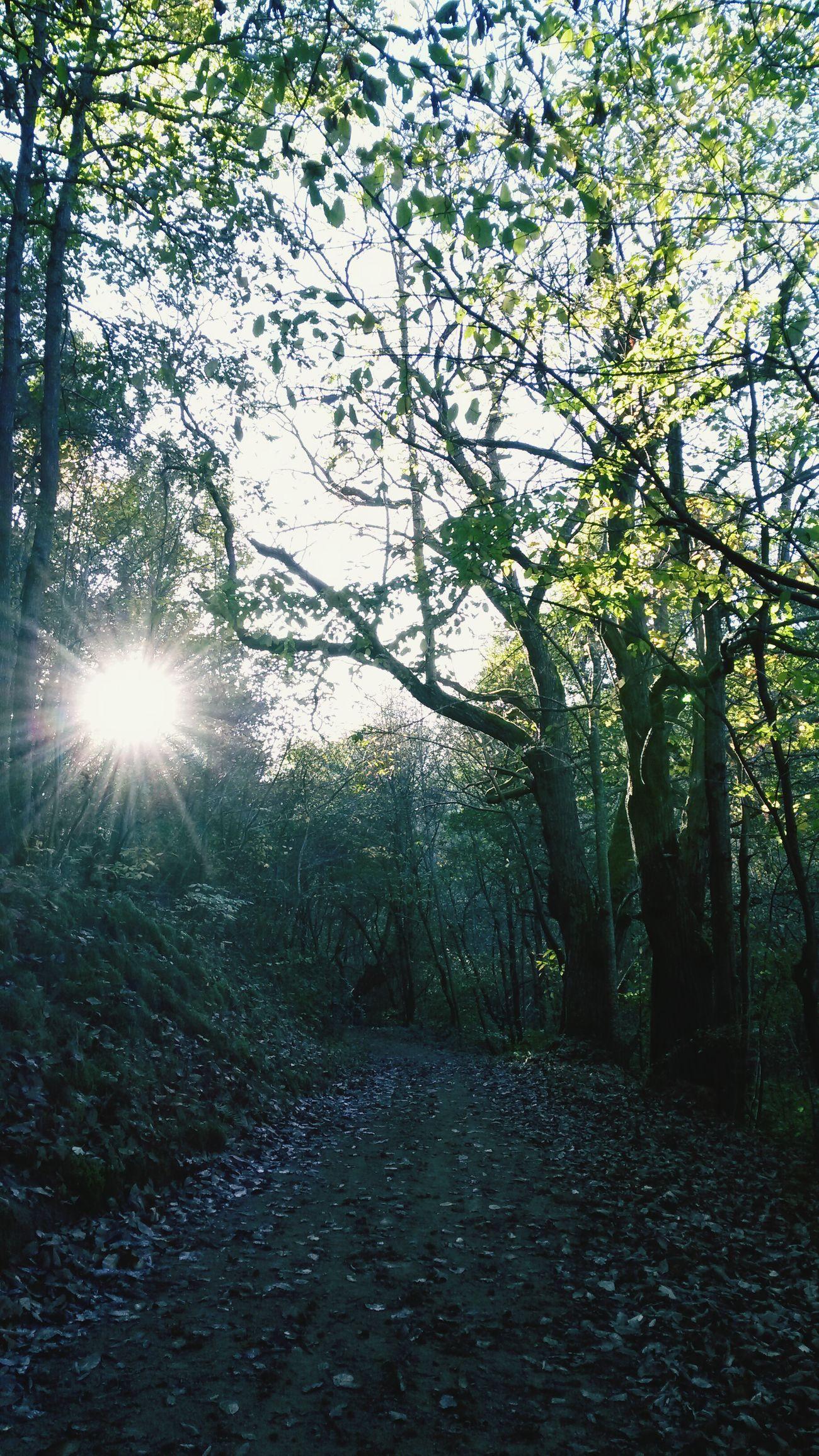 Nature Trees Wood Forêt de novembre