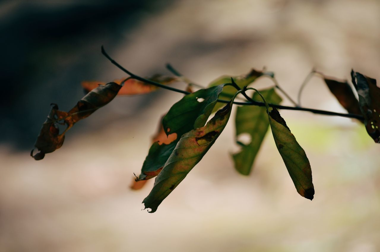 Autumn Branch Branches Fall Fall Colors Leaf Leafes Mental Mentalhealth  Nature Nature Colors Nature Photography Peace And Quiet Stable