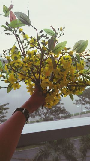 Human Hand Human Body Part One Person People Close-up Outdoors Sky Tết Lunar New Year Lunarnewyear China New Year Flower Spring Springtime Traditional Culture Vietnam Vietnam Photos