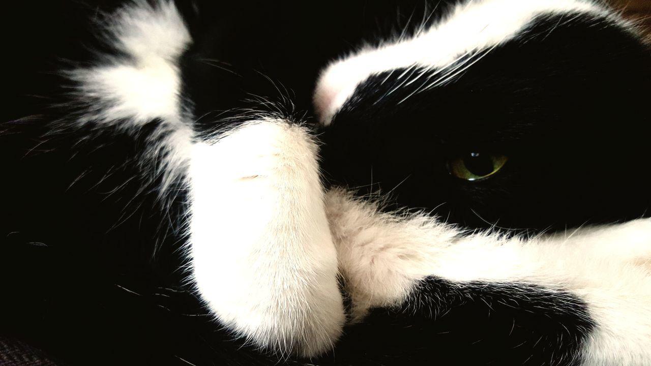 pets, one animal, domestic animals, animal themes, mammal, dog, animal head, indoors, close-up, no people, feline, day