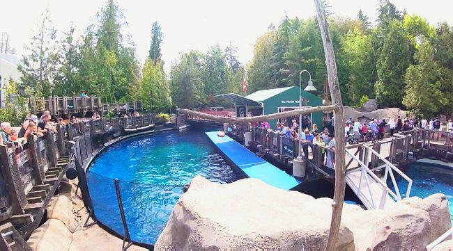 Delfines en el Vancouver Aquarium. 🐋 Colour Of Life