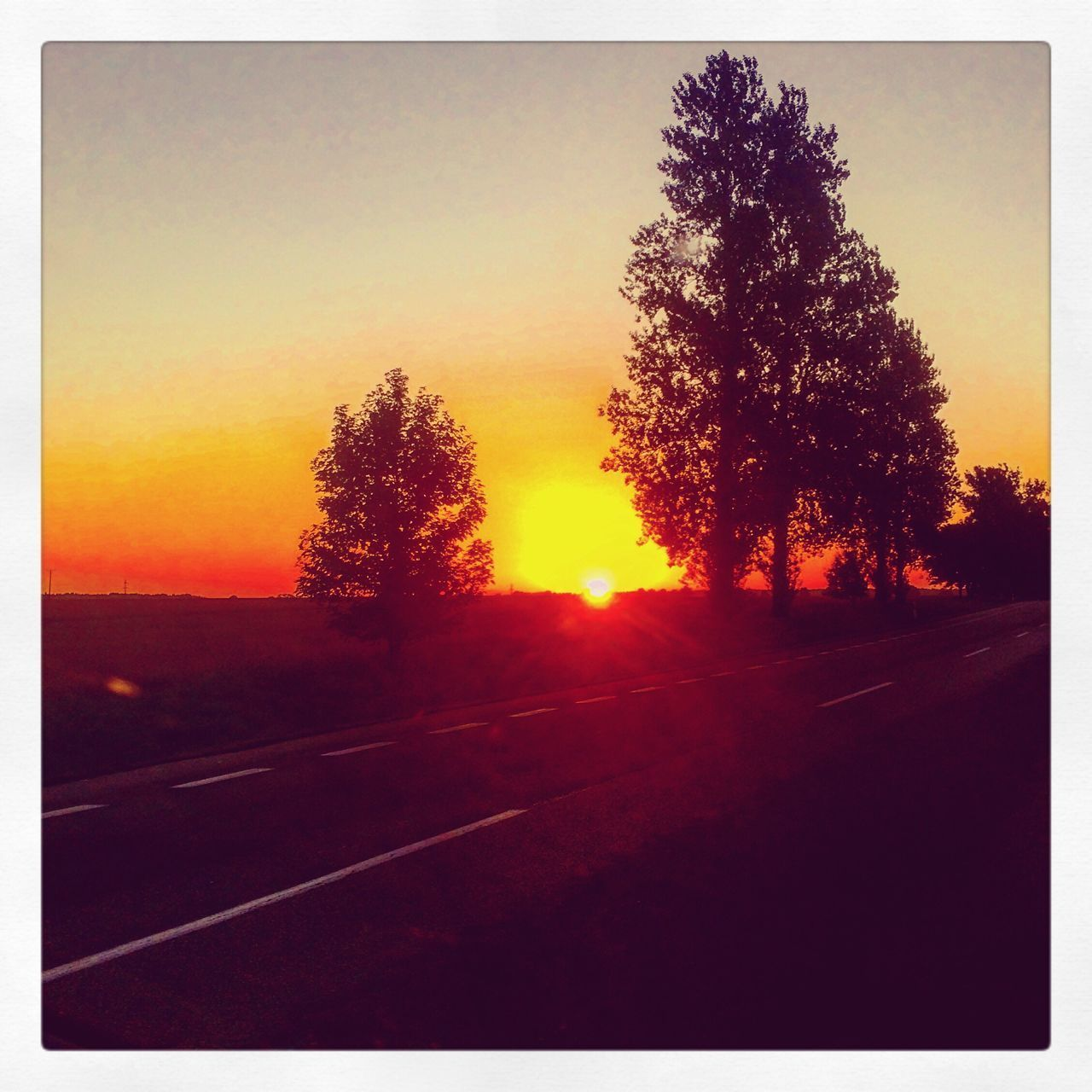 tree, sunset, road, silhouette, sun, nature, no people, tranquil scene, transportation, scenics, beauty in nature, outdoors, sky, tranquility, sunlight, the way forward, landscape, clear sky, day