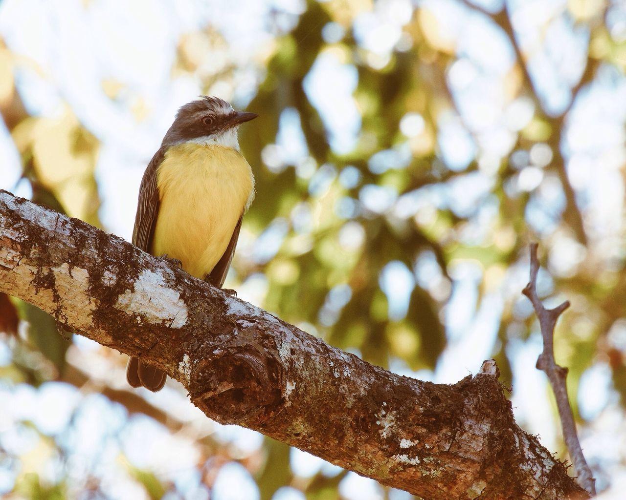 Beautiful stock photos of costa rica, Animal Themes, Animals In The Wild, Beak, Beauty In Nature