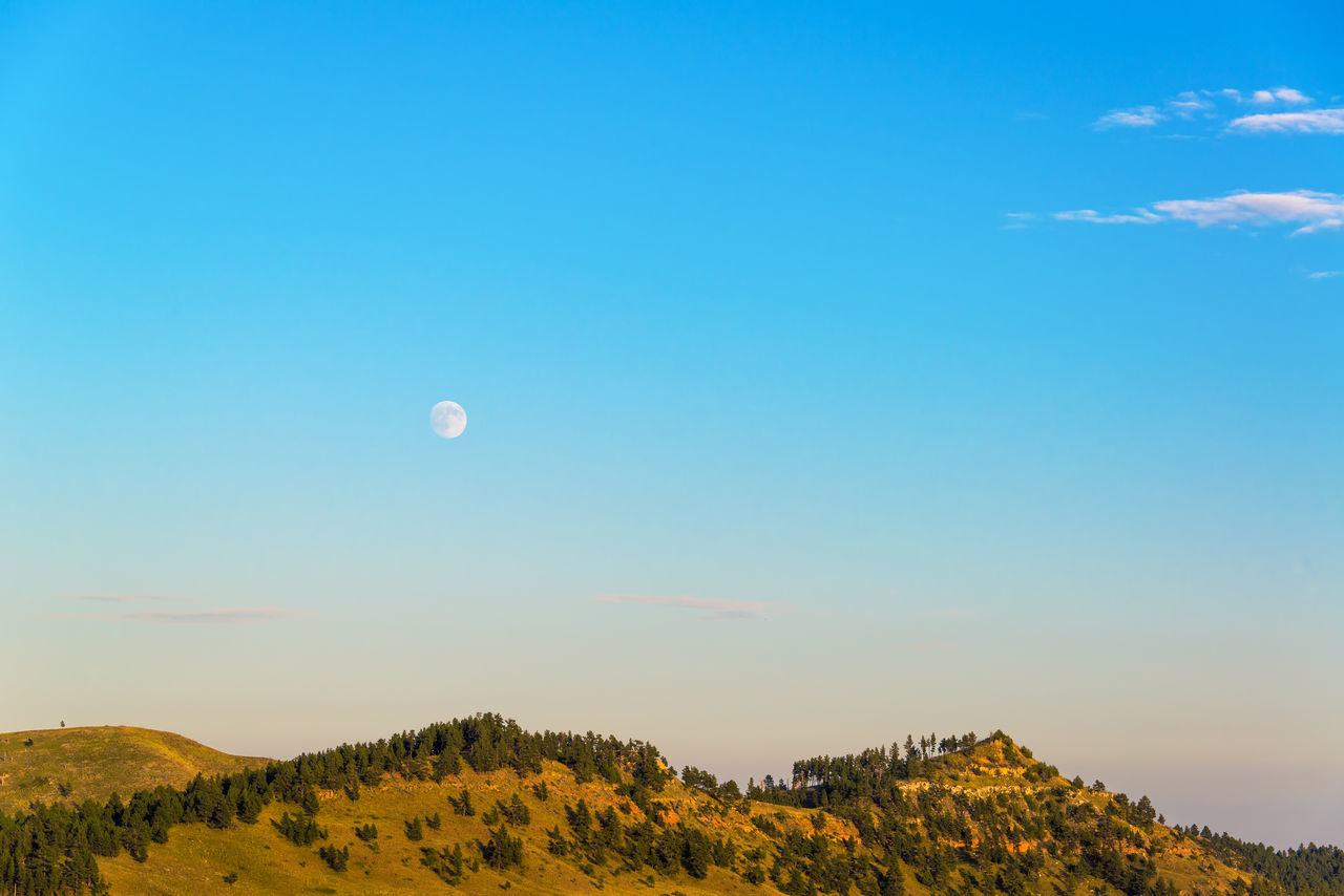 Moon rising over hills in Custer State Park, South Dakota Afternoon Beauty In Nature Black Hills Blue Custer State Park Forest Landscape Late Afternoon Moon National Forest Nature No People Outdoors Park Park - Man Made Space Scenics Sky South Dakota Tourism Tranquil Scene Travel Tree Tree Trees USA