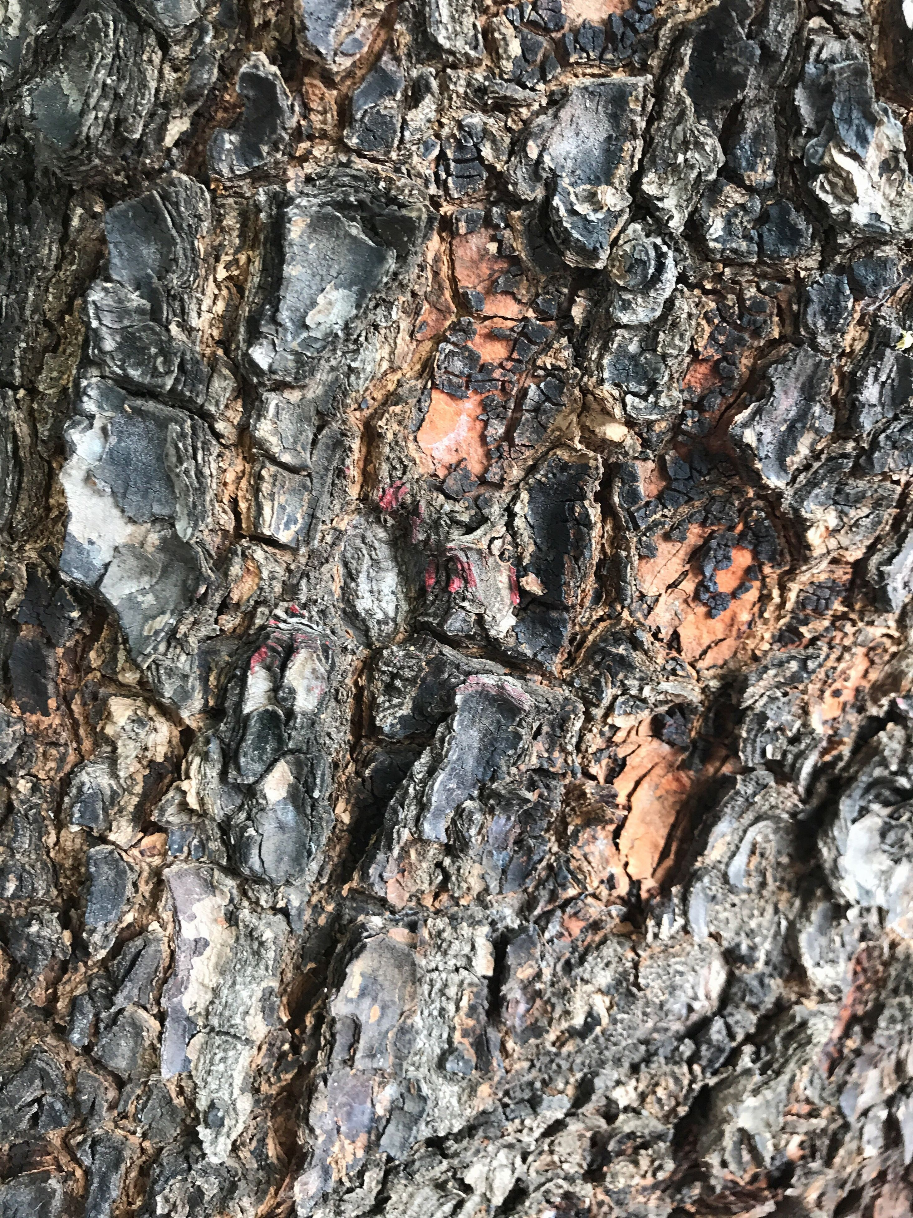 textured, rock - object, full frame, rough, tree trunk, backgrounds, pattern, no people, tree, close-up, nature, outdoors, day