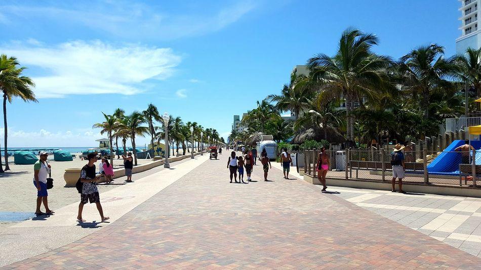 Florida Hollywood Florida Palm Tree Beach USA Trip Holiday Trip Sky Day Sea